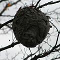 Bee Hive by Carolyn Postelwait