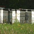 Bee Hives In A Farmer's Field by Jack Dagley