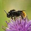 Bee I by Vicki Field