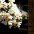 Bee In Crape - Verse by Anita Faye