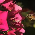 Bee In Flight by Edelberto Cabrera