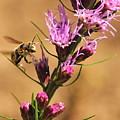 Bee In Flight by Michelle DiGuardi