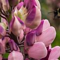 Bee In Flight by Yvette Schneider-Little