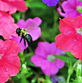 Bee In Flower Garden by Lydia Holly