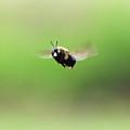 Bee by Jeanette Fiveash