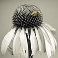 Bee by Jerri Moon