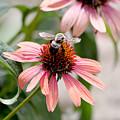 Bee Leaving Flower by Lita Kishbaugh