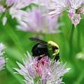 Bee by Melanie Beasley
