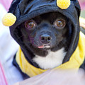 Chihuahua Says Bee Mine by Toni Hopper
