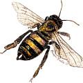 Bee by Monique Faella