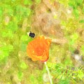 Bee My Flower by Image Takers Photography LLC - Laura Morgan