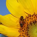 Bee My Sunshine by Shari Jardina