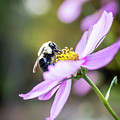 Bee On Flower by Framing Places