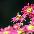 Bee On Flower Spring Scene by Goce Risteski