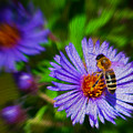 Bee On Lavender Flower by Chester Wiker