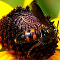 Bee On Lazy Susan 4 by J M Farris Photography
