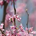 Bee On Pink Bloom by Diane Friend