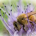 Bee On Purple by Inge Riis McDonald