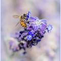 Bee On Sage by Theresa Corrada