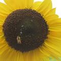 Bee On Sunflower by Karen Molenaar Terrell