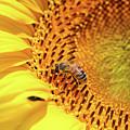 Bee On Sunflower Summer Nature Scene by Goce Risteski