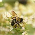 Bee On Top Of Things by Ola Allen