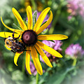 Bee On Yellow Coneflower by Alan Hutchins