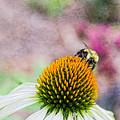 Bee On Yellow Coneflower by Nikki Vig