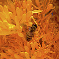 Bee Positive by Tania Read