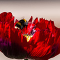 Bee Right Back With Red Flower by Jacek Wojnarowski