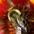 Bee Six - by Silvana Siudut