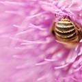 Bee The Moon by Graham Elliott