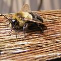 Bee-u-tiful by Ed Smith