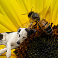 Bee With Dog by Roger Medbery
