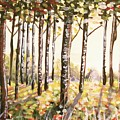Beech Trees At Dawn by Kate Evans
