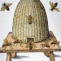 Beehive, 1658 by Granger