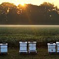 Beehives At Sunrise by Catherine Sherman