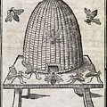 Bees And Beehive, 17th Century Artwork by Middle Temple Library