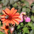 Bees-y Day by Jason Nicholas
