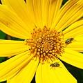 Beetle by Bert Mailer
