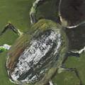 Beetle by Craig Newland