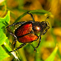 Beetle Take-off by Pradeep Bangalore