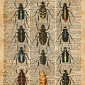 Beetles Bugs Zoology Illustration Vintage Dictionary Art by Anna W