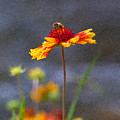 Beeutiful Orange Methow Valley Flowers By Omashte by Omaste Witkowski