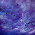 Before It Storms by Iryna Goodall