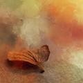 Beginning Autumn  by Terry Davis