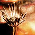 Beginning To Bloom by Lori Dobbs
