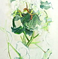 Begonia Ballet by Bonnie See
