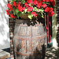 Begonias In The Barrel by Carol Groenen