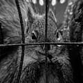 Behind Bars by Bob Orsillo